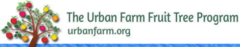 The Urban Farm Nursery