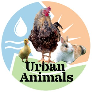 Urban Animals: How to Raise Chickens, Goats, and More in Your Backyard