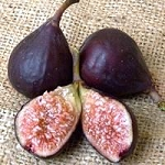 Fig, Violette de Bordeaux
