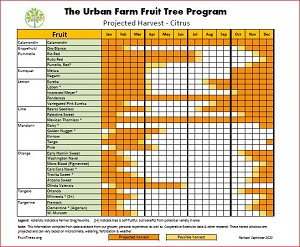 Harvest Calendar for Citrus