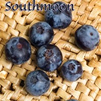 BLUEBERRY (E)- Southmoon